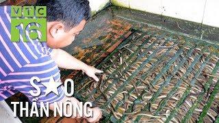 Tỷ phú nuôi lươn không bùn đất Sài thành I VTC16