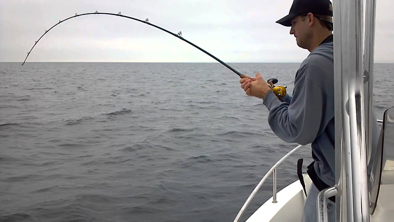 San diego yellowtail fishing chris hooked up to a for Fishing license san diego