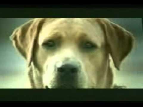 Nayanthara .. video