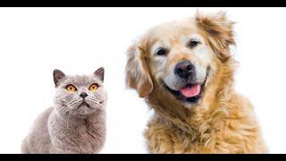 Uso de reiki em animais