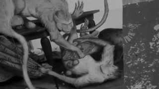 Vorschaubild Karies + Pisse + Gewalt
