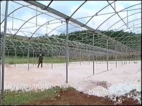 Protected Cultivation: use of hydroponics and greenhouse technology