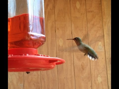 Hummingbirds of North Idaho. See the hummingbirds fly around and feed from the hummingbird feeder.