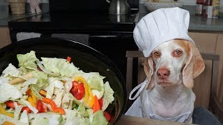 Dog Makes Salad: Funny Dog Maymo