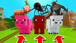 Minecraft PE : DO NOT CHOOSE THE WRONG PIG! (Muddy Pig, Black Widow & Werewolf)