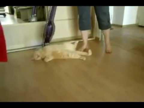 Кошки и пылесос