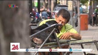 Ông lão nhặt ve chai kiếm tiền nuôi bầy chó tật nguyền | VTV24