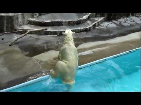 浜松市動物園「キロルのごはんタイム」2011.07.30