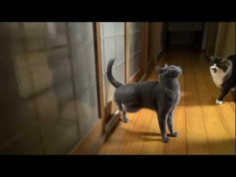 目にも止まらぬ早技!!高速ノックをする猫