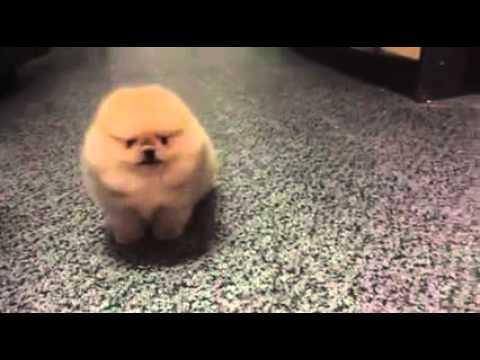 Tiny Dog Barking.mp3