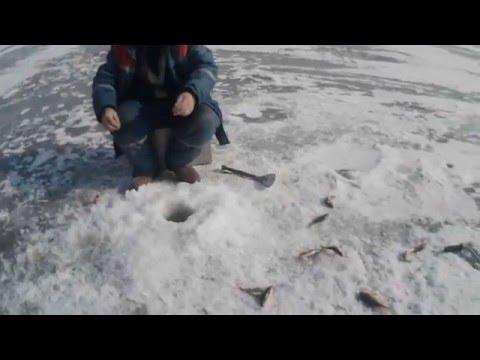 рыбалка в хакасии на карася видео