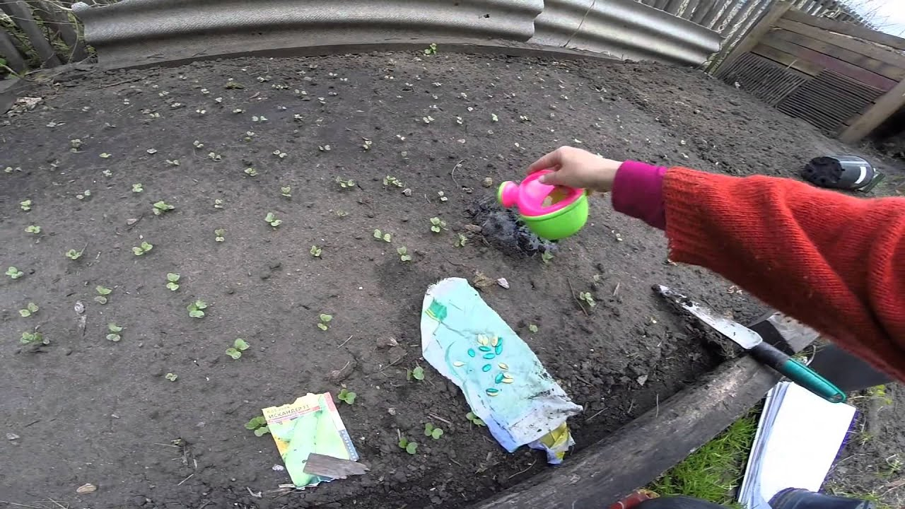 Кабачки сажать в грунт