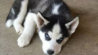 Funny Dog Cute Dog Vine Compilation 2020 Cutest Puppies Ever Videos Puppies