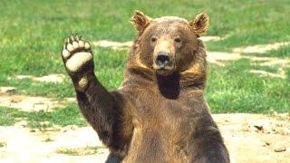 Hayvanlar - Derlenmiş Komik Ayı Videoları