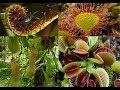 Böcek yiyen bitkiler, Etçil Bitkiler, Et yiyen bitkiler, Etobur Bitkiler.