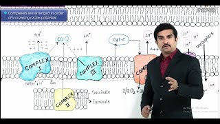 Electron transport chain ( ETC ) and Oxidative phosphorylation - USMLE Step 1 Biochemistry