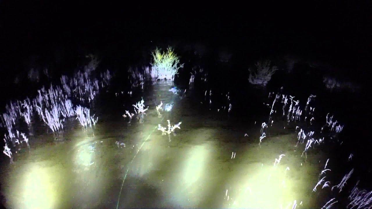 Night Bowfishing in Texas