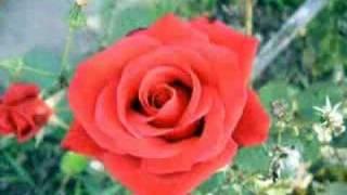 Hasan DURSUN-Açan Çiçekler