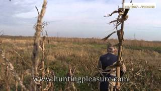 Hare Hunting In Hungary With Hunting Pleasure 2014