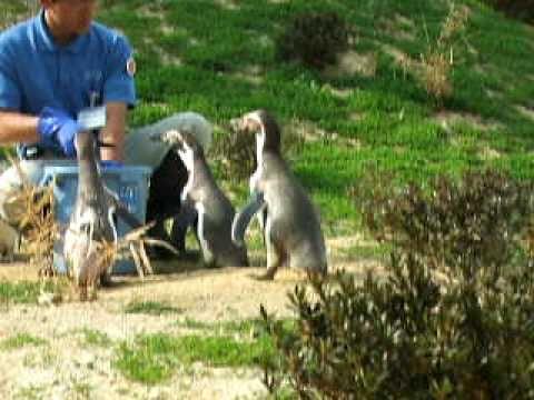 ペンギンヒルズ@埼玉県こども動物自然公園