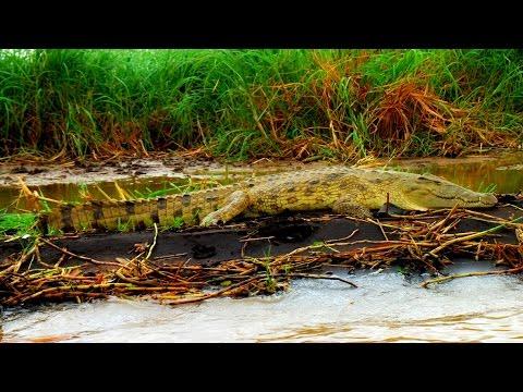 Crocodile Market, Lake Chamo, Ethiopia