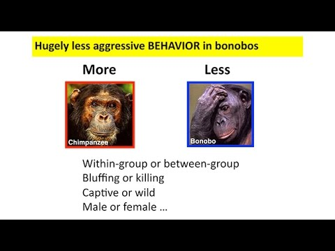 Carta: Domestication And Human Evolution - Richard Wrangham: Did Homo Sapiens Self-domesticate? video
