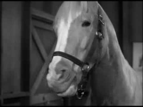 Ween - The Stallion pt 2