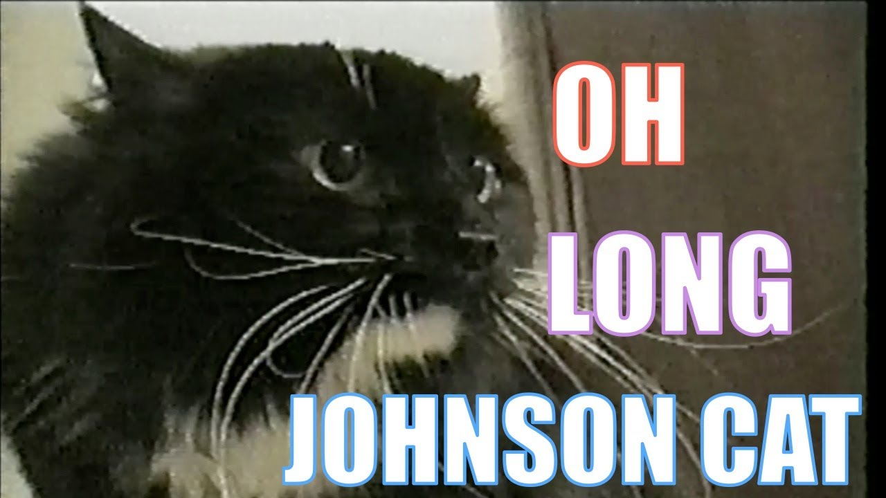 talking cat saying quotoh long johnsonquot youtube