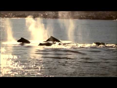 Meet South Africa (South African Tourism Official video)