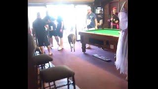 Kangaroo Hops Inside Pub for a Cold One || ViralHog