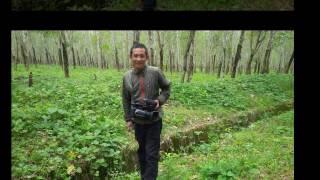 Objek Wisata Pohon Karet Kabupaten Bulukumba