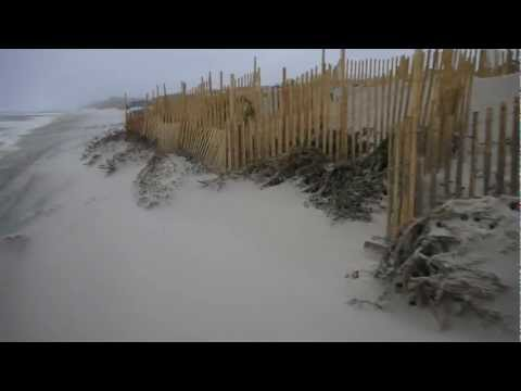 Dunes and Christmas trees in Midway Beach at 14th Ave