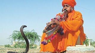 Snake and Snake Charmers