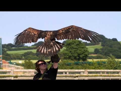 Imperial Bird of Prey Academy Barkingside Greater London