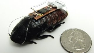 Remote-Controlled Cockroach Trained to be First Responder
