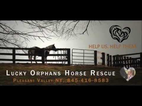 lucky horse rescue ny