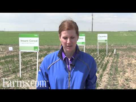 Wheat Report: Clearfield Wheat Production System Overview