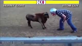Street Fighter Animals fighting humans