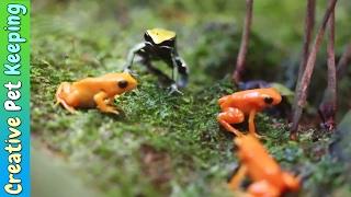 Amazing Tiny Frogs 🐸 | Shedd Aquarium Amphibians Exhibit