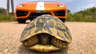 Download Saving A Tortoise In A Supercar! 3Gp Mp4