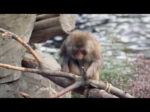 Central Park Zoo With Sad Monkey Sex video