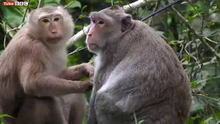 Oh My God!!! What is this? After Monkey Give a Birth | Baby monkey just newborn