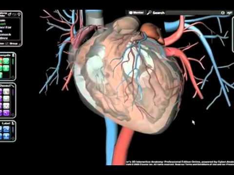 Frank H Netter, MD - Atlas de Anatomia Humana