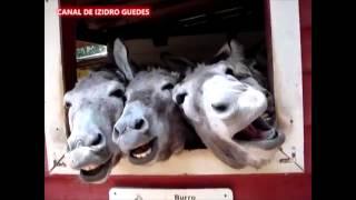 Burros Cantores