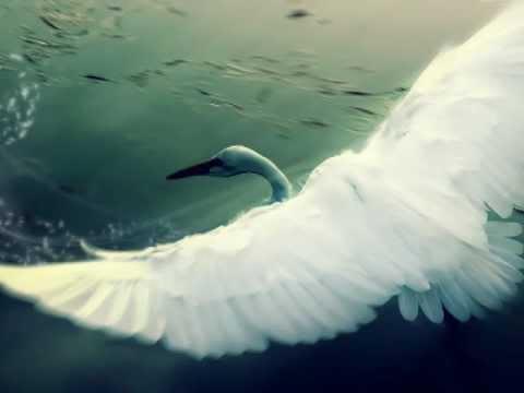 Татьяна и Елена ЗАЙЦЕВЫ - Белая лебедь