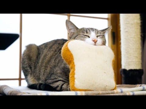 食パンに顎を乗せてスヤス...