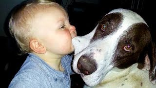 Adorable Dogs and Baby Compilation | Funny And Fails Videos