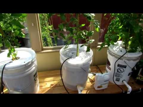 Dutch Bucket Hydroponics System