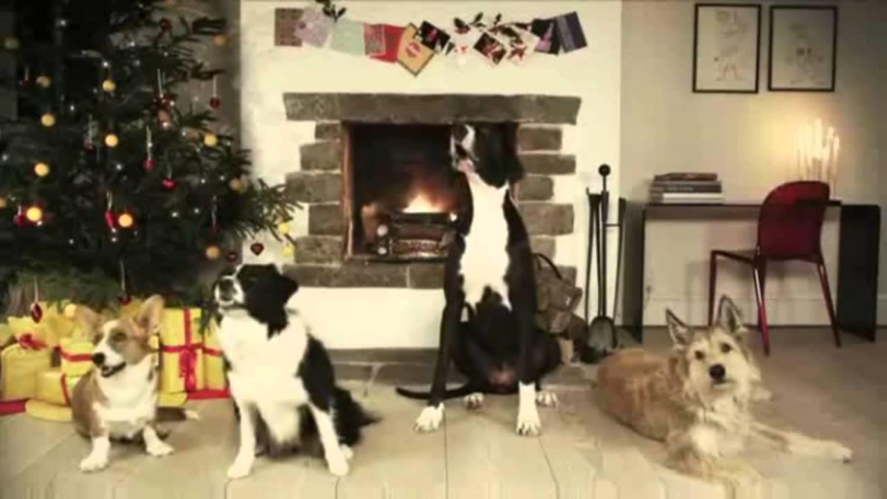 Cantando Navidad Perros Cantando Navidad