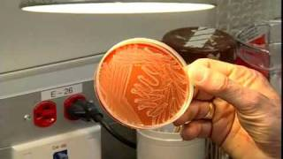 A tour of the Microbiology Lab - Section one